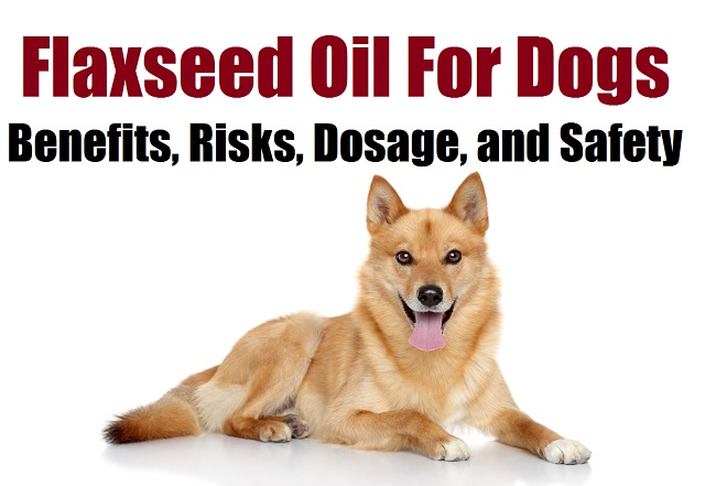 Flaxseed Oil For Dogs 650px