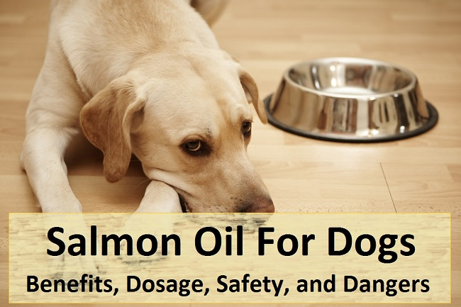 Salmon Oil For Dogs 650px